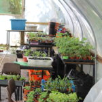 Poly Tunnel 1