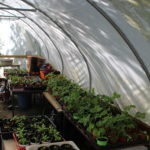 Poly Tunnel 2